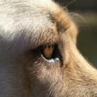 Boekrecensie: Een held van een hond