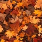 Knutsels: herfstcollage voor dementerenden en kinderen