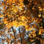 Fotografie: herfst