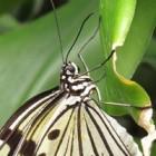 Natuurfotografie voor beginners