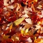 Activiteiten en spelletjes voor de herfst