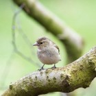 Boekrecensie: Kikker en het vogeltje, kinderboekje over dood