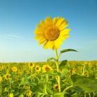 Werken met gedroogde bloemen en planten