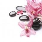 Ikebana: Japanse bloemschikkunst met een spiritueel tintje